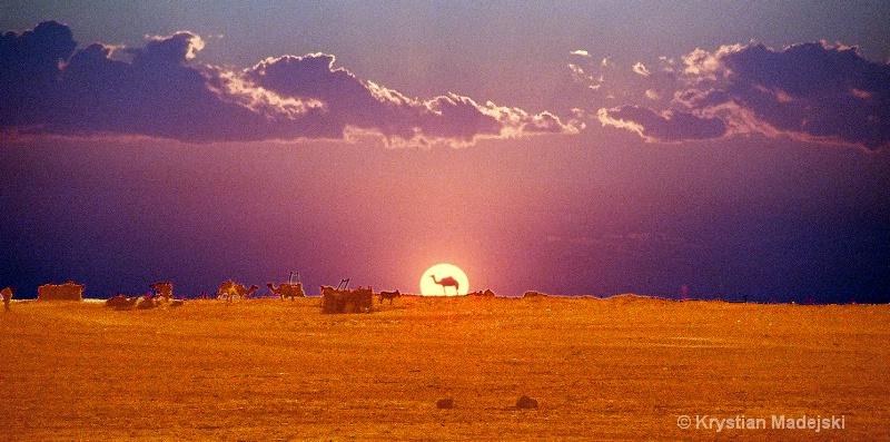 Camel in the sunset - sunlights - ID: 7148539 © Krystian Madejski
