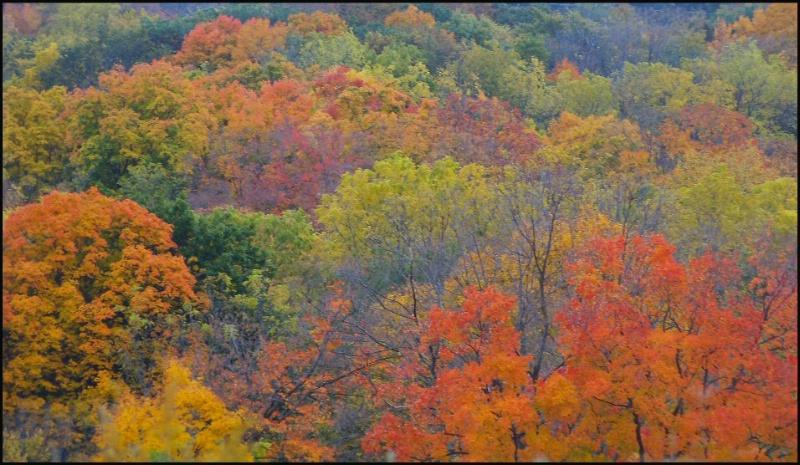 Exhibiting Autumn