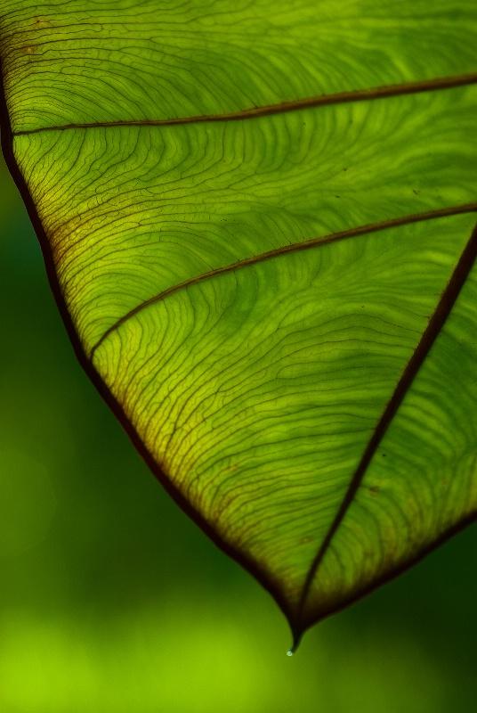 Pattern In Green
