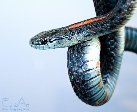 Curious Snake
