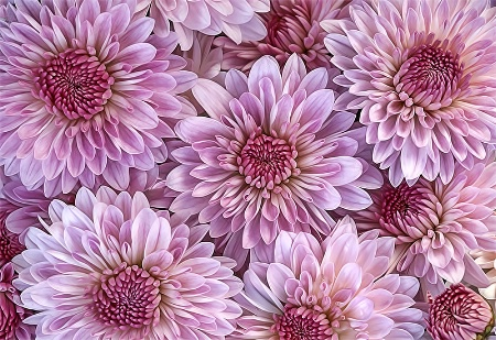 Pretty Pink Petals
