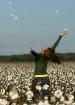 Cotton Fresh