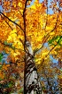 Tree of fall Colo...
