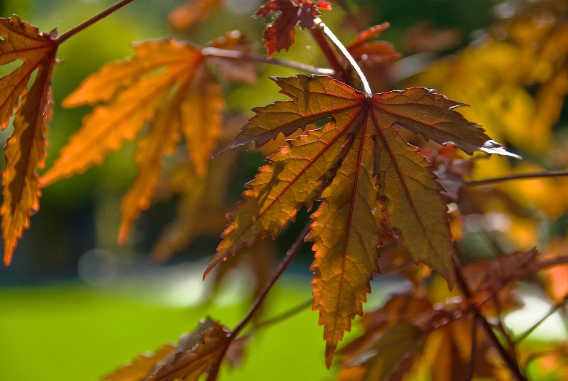 Detailing Autumn