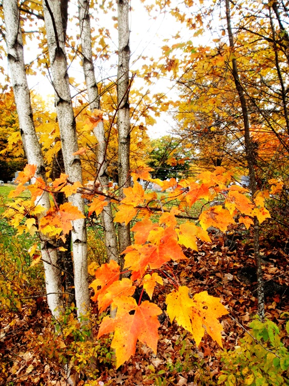 Fall Colors in Vermont - ID: 7220233 © Daryl R. Lucarelli