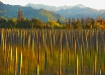 painted vineyard