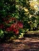 A hint of fall OC...