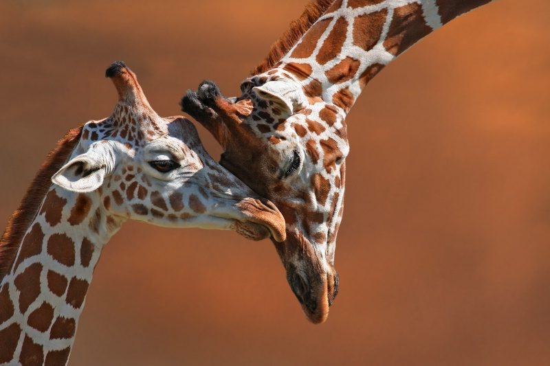 Mother's Love - ID: 7223628 © Kathy Reeves