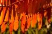 Sumac on Fire