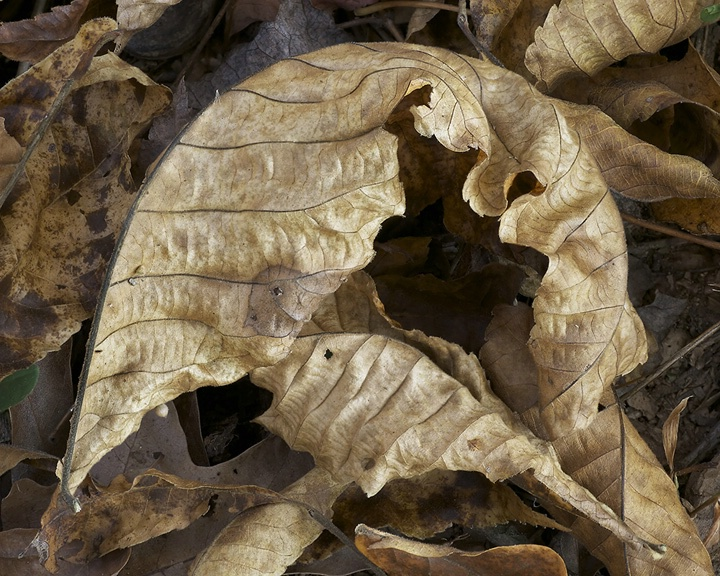 Leafscapes #3