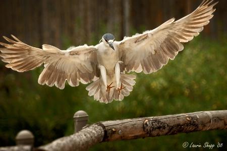 Perfect Landing