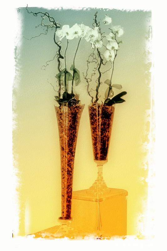 Flowers from Carthusia Capri - ID: 7252956 © Lynn Andrews