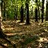 © Pam Bosch PhotoID # 7263813: Maine Coastal Woodland