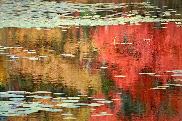 Brush painted reflection