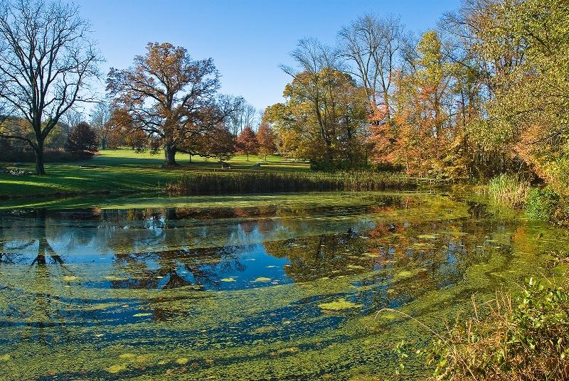 Fall Of Algae