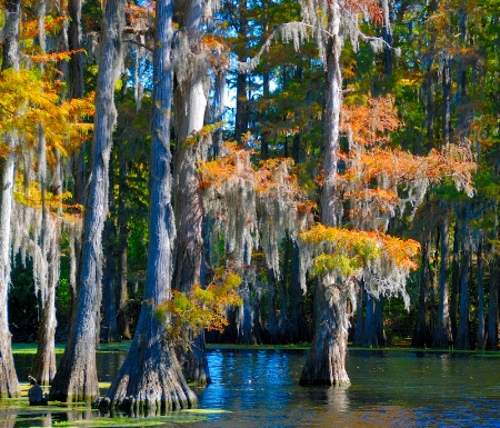 Fall On The Bayou October 28, 2008