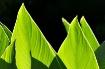 Leafy subject