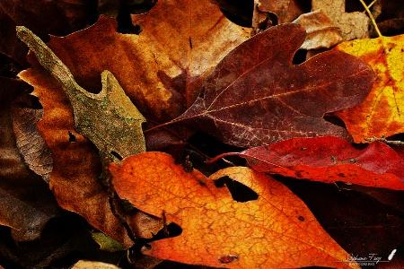 Seasonal Textures