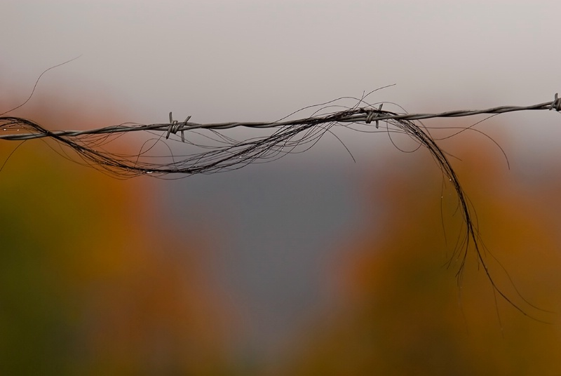 Horse Hair - ID: 7306068 © Kelly Pape