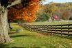 Autumn Fencerow