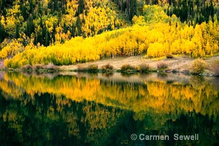 Colorado Aspen 2 - ID: 7315587 © Carmen B. Sewell