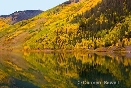 Colorado Aspen - ID: 7315588 © Carmen B. Sewell
