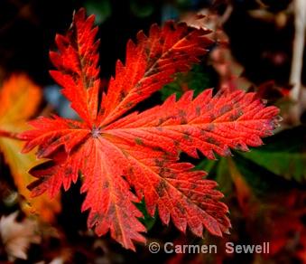 Read Leaf 2 - ID: 7315590 © Carmen B. Sewell