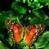© Carmen B. Sewell PhotoID # 7315812: Butterfly
