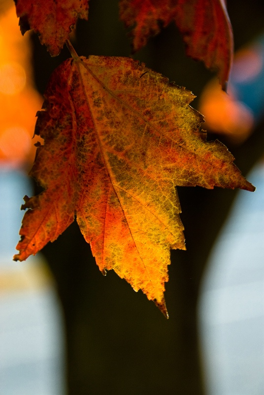 Leaf 'n' Tree