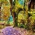 © Richard Palmer PhotoID # 7320260: The Enchanted Forest
