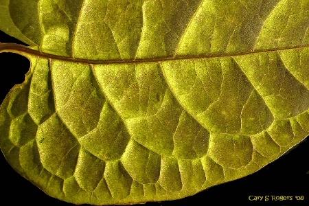 Light on Leaves (#33)
