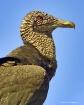 patient-bird
