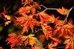 Fall colours - Sh...