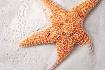 ~ Starfish ~
