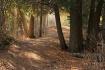 Cascade Pathway