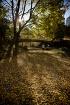 A Crisp fall jog