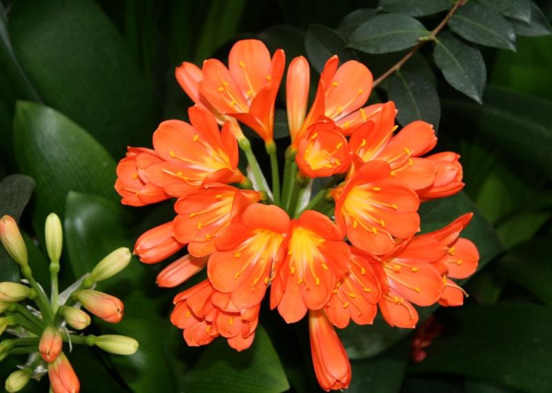 Karl's favorite - Orange flower - ID: 7385574 © M.  Martha M. Eid