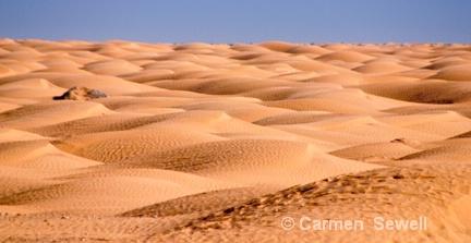 Sahara Sands - ID: 7407517 © Carmen B. Sewell