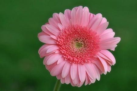 ~Tickled Pink~