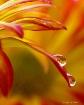 drops  reflecting