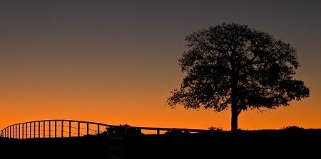 November's Dawn