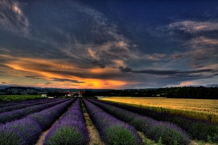 Purple Sunset