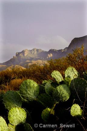 Big Bend Landscape - ID: 7434785 © Carmen B. Sewell