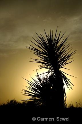 Yucca Silhouette - ID: 7434791 © Carmen B. Sewell