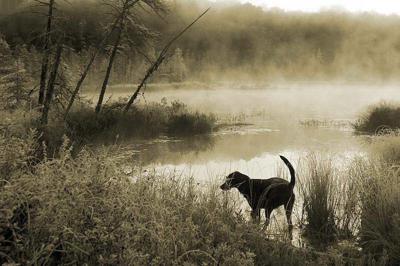 Swamp Dog