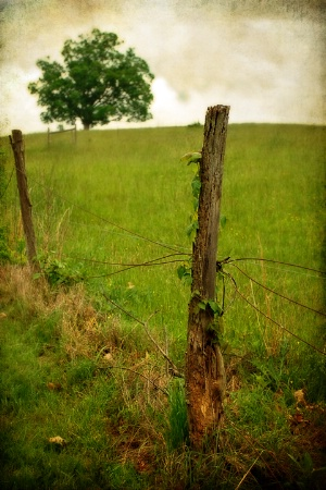 Old Fence Post