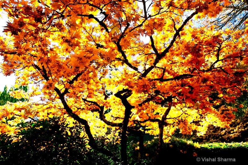 Butshart Gardens, Victoria, Canada