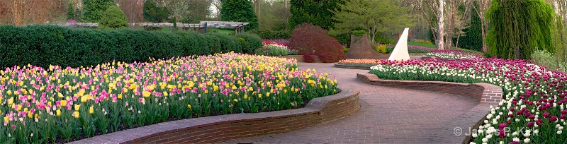 Tulips at Brookside