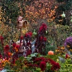A Riot of Autumn ...