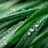 Droplets - ID: 7498587 © Kathleen Roughan